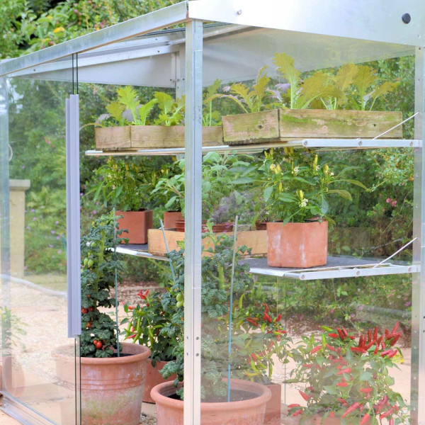 Buy Midi Growhouse Natural Finish 1.21m Online - Greenhouses