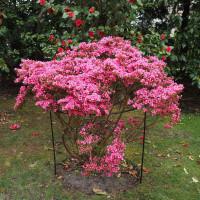Buy Gardening Trees & Shrubs Online Today Find Trees & Shrubs deals Online - Keep your garden happy with Egardener Online