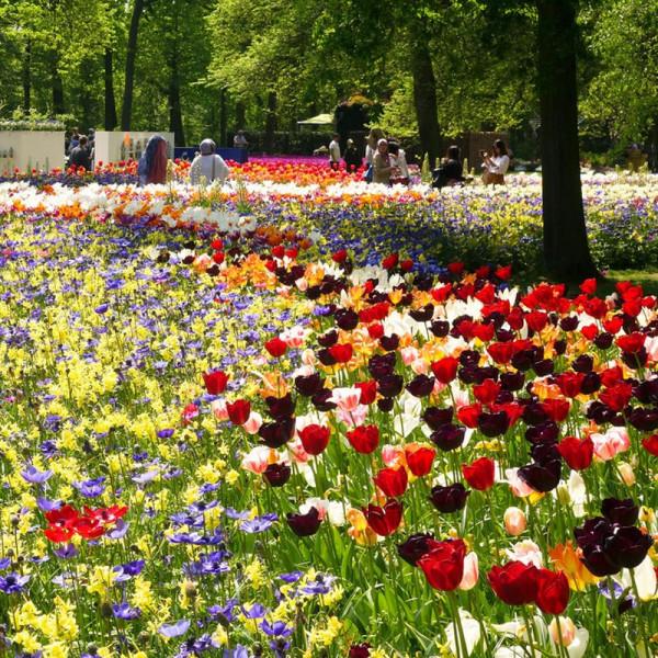 Buy Bumper Spring Bulbs Collection Online - Garden Plants & Bushes